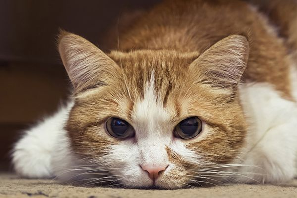 If You Re Thinking Of Adopting A Kitten Whether Three Weeks Old Or Six Months Old He S Going To Require Proper Nutr Sick Cat Cat Illnesses Cat Having Kittens