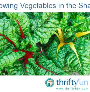 A site receiving full sun is premium real estate in the vegetable garden. If sunny spots are in short supply in your garden, an easy way to free up space, expand your garden (and your yields) is to use the shady spots in your garden to your advantage.