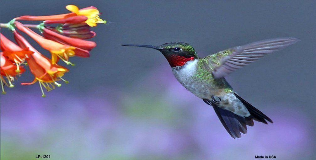 AmazonSmile Hummingbird License Plates Plate Tag Tags