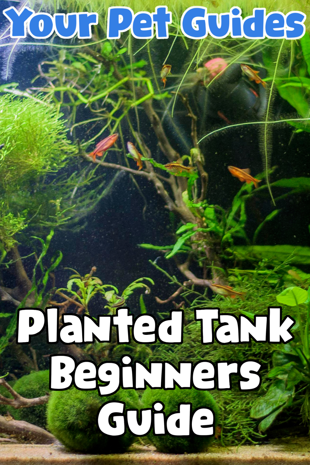 As well as looking nice, planted tanks can be really beneficial for your pet fish. They provide the aquarium with dissolved oxygen and keep the CO2 levels low, whilst also providing additional filtration. Many people believe that planted tanks are too expensive and require too much maintenance and so they opt for fake alternatives, and while a sliver of truth is there, this isnt always the case.