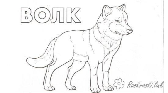лесной хищник волк, раскраска, природа,животные | Лесные ...