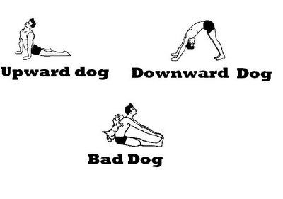 "call this position ""bad dog""  upward dog downward dog memes"