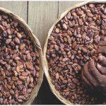 La mayoría de las personas disfruta experimentar la exquisitez del cacao-chocolate en su paladar. Su olor afrodisiaco despierta las más bajas pasiones; saborearlo, masticarlo de manera voraz, o lamerlo para que tarde más en terminarse, provoca la sensación de estar en el paraíso. Aunque en realidad, pocos conocen el verdadero umbral del chocolate.Los primeros en …