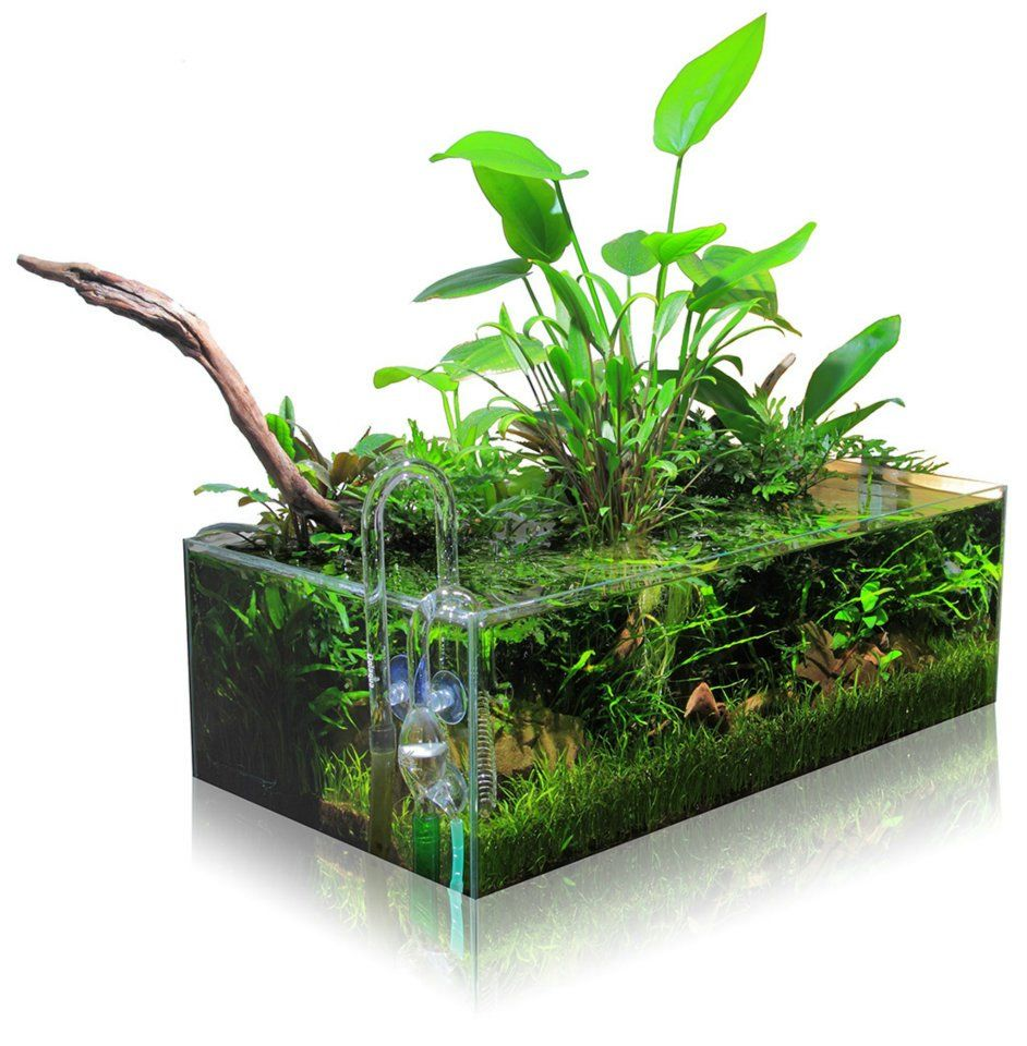 Pin Von Usei M Auf Aquariums Aquascaping Planted Aquarium Indoor Wassergarten