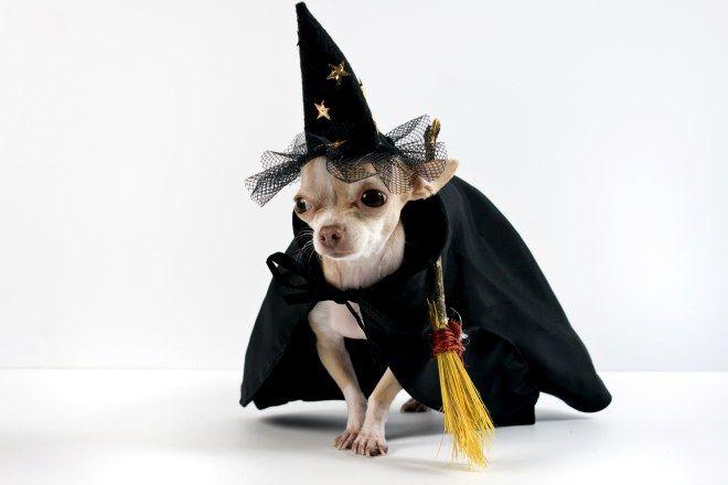 Resultado de imagen para Perros disfraz de brujos