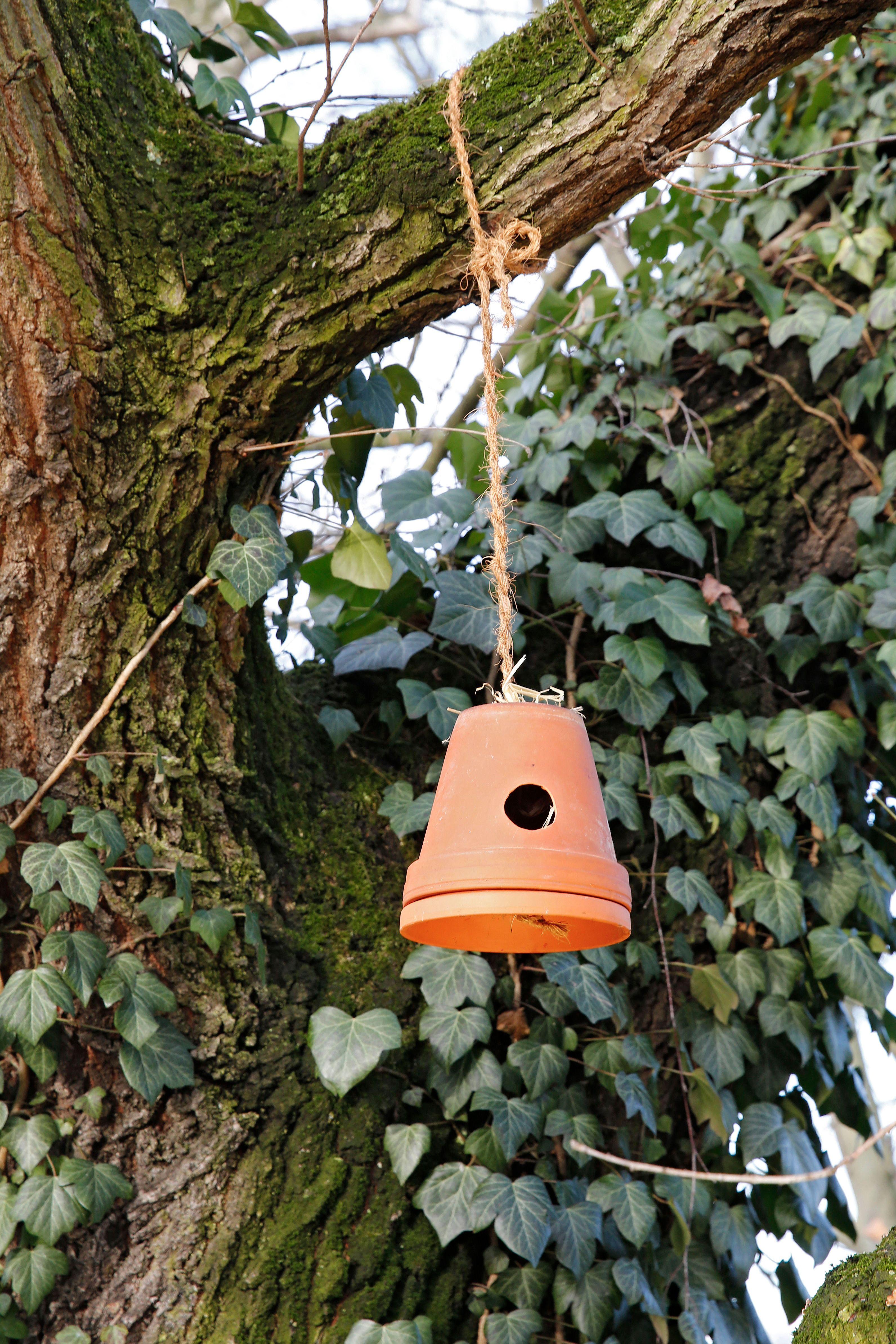 Kreatives Aus Topfen Gartentipps Garten Nisthilfen