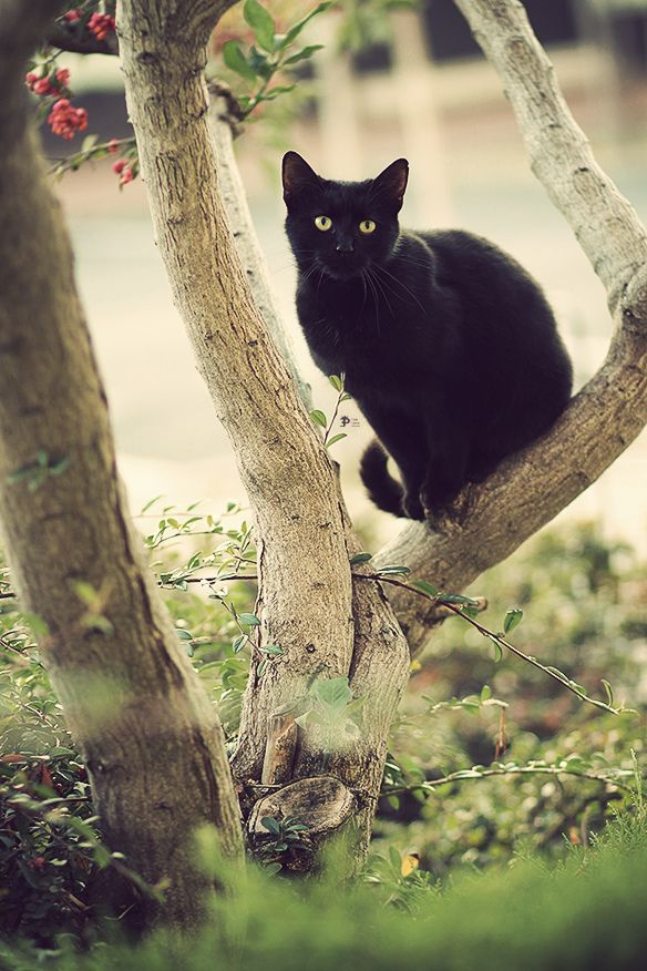 I am not fond of black cats but I thought this pic was really striking.