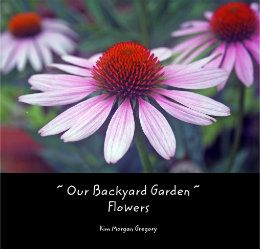 PHOTOS from our Low Country Garden http://www.blurb.com/b/4129742-our-backyard-garden-flowers#   Click to preview book    Hard Cover Dust Jacket $35.00