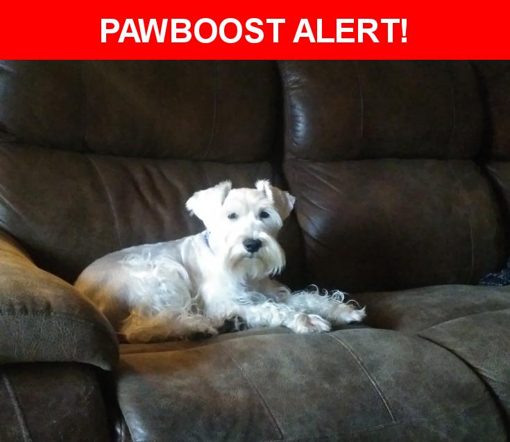 Please spread the word! Chiquis was last seen in McAllen, TX 78504.    Nearest Address: Near Hawk Ave & N 21st St