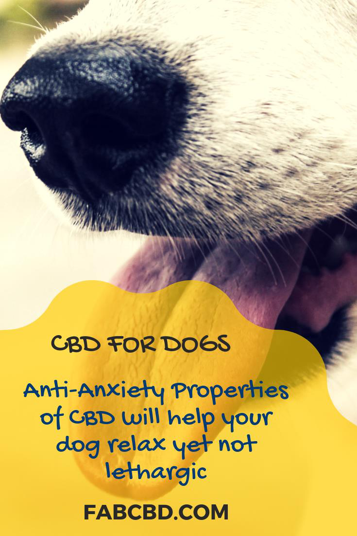 CBD oil cures anxiety in dogs  Cbd oil cures eplipsy in dogs