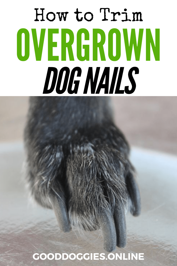 How To Trim Dog Nails That Are Overgrown Complete Guide Good Doggies Online Dog Nails Trimming Dog Nails Dog Grooming Tips