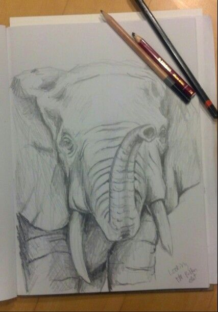Heres my male african elephant sketch pencil first step in my art making process