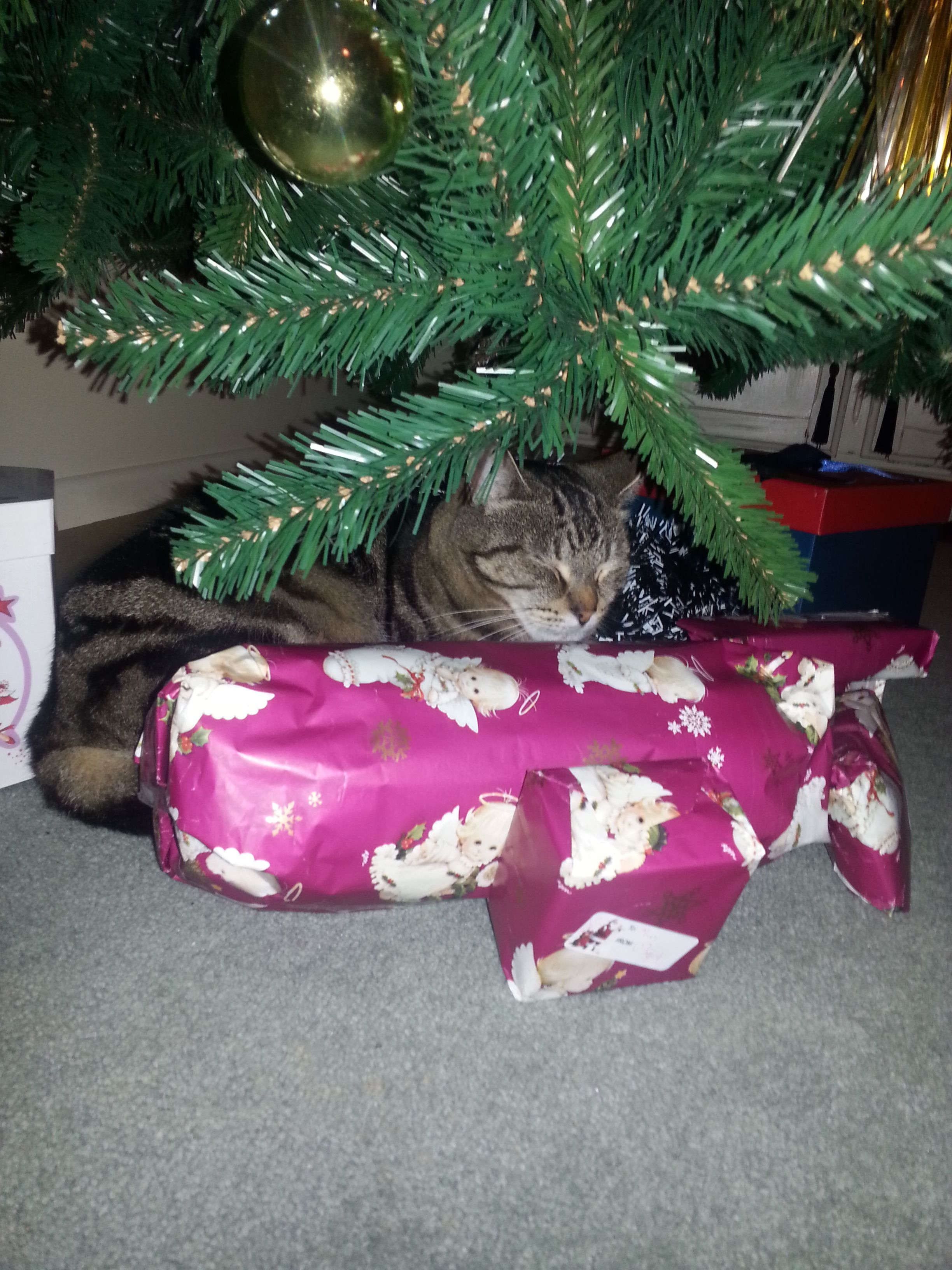 My cat sebastian curled up under the christmas tree itus