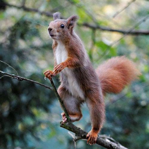Stading Squirrel By Snowporing Ardillas Amo Los Animales