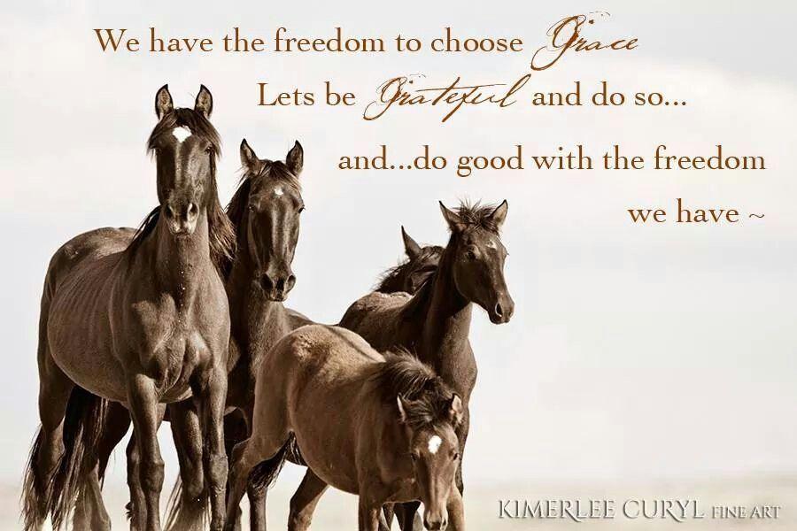 On Freedom Horses Wild Horses Horse Love