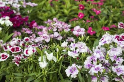 What Is Reseeding How To Manage Self Seeders In Gardens Plants Flower Pots Seeds
