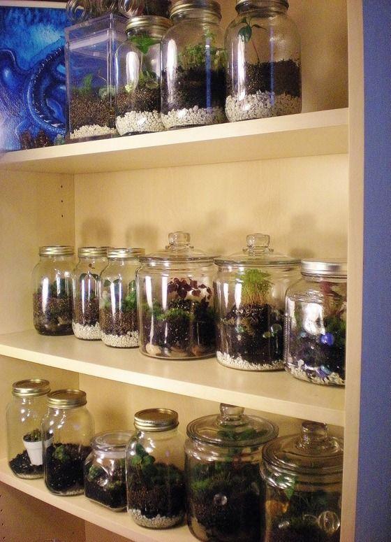 Copious: Baby Miniature Violet Terrarium Moss Living Art Medium Glass Apothecary Jar
