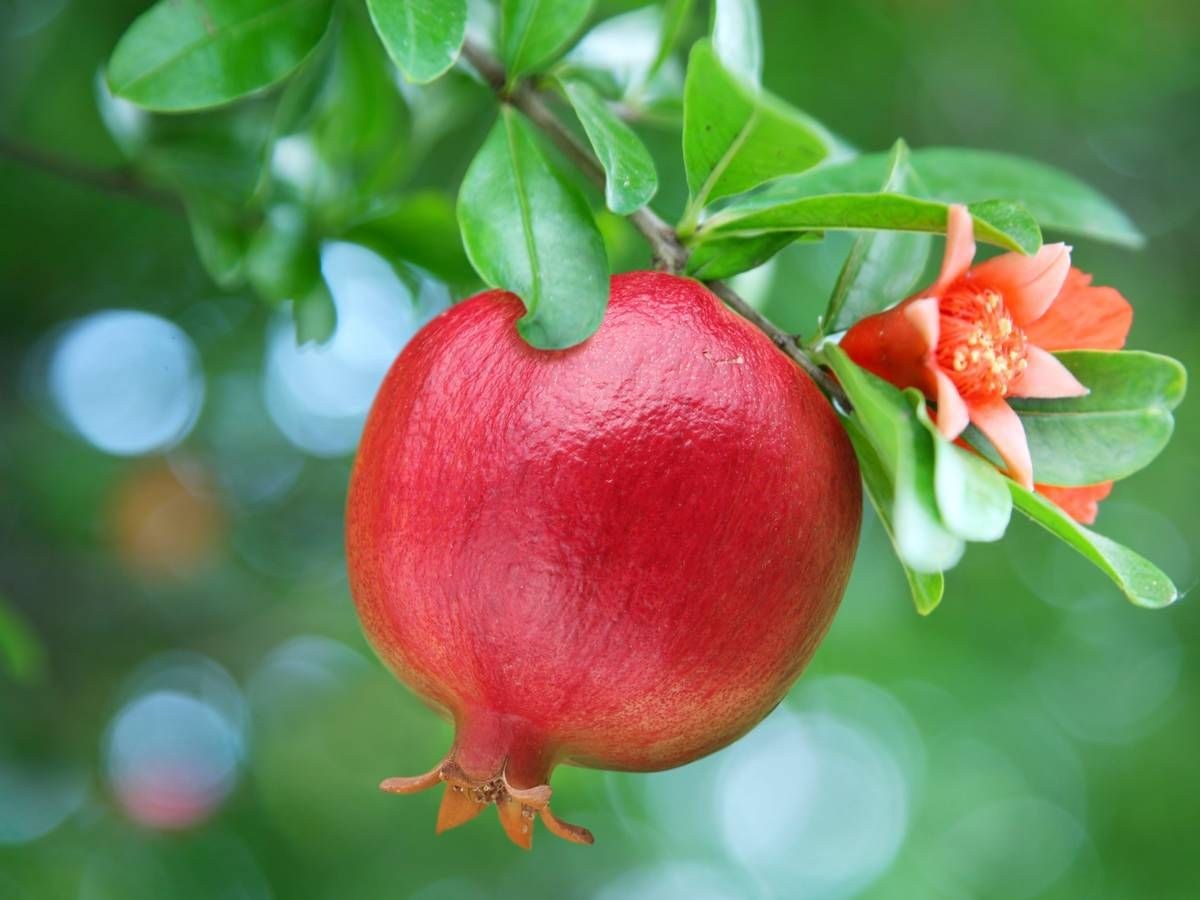 10 Fruit Trees You Can Easily Grow In A Pot Or Container Fruit Photography Fruit Trees In Containers Growing Fruit Trees