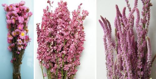 Pink Dried Flowers Three Popular Pink Bunches At A Reduced Rate For