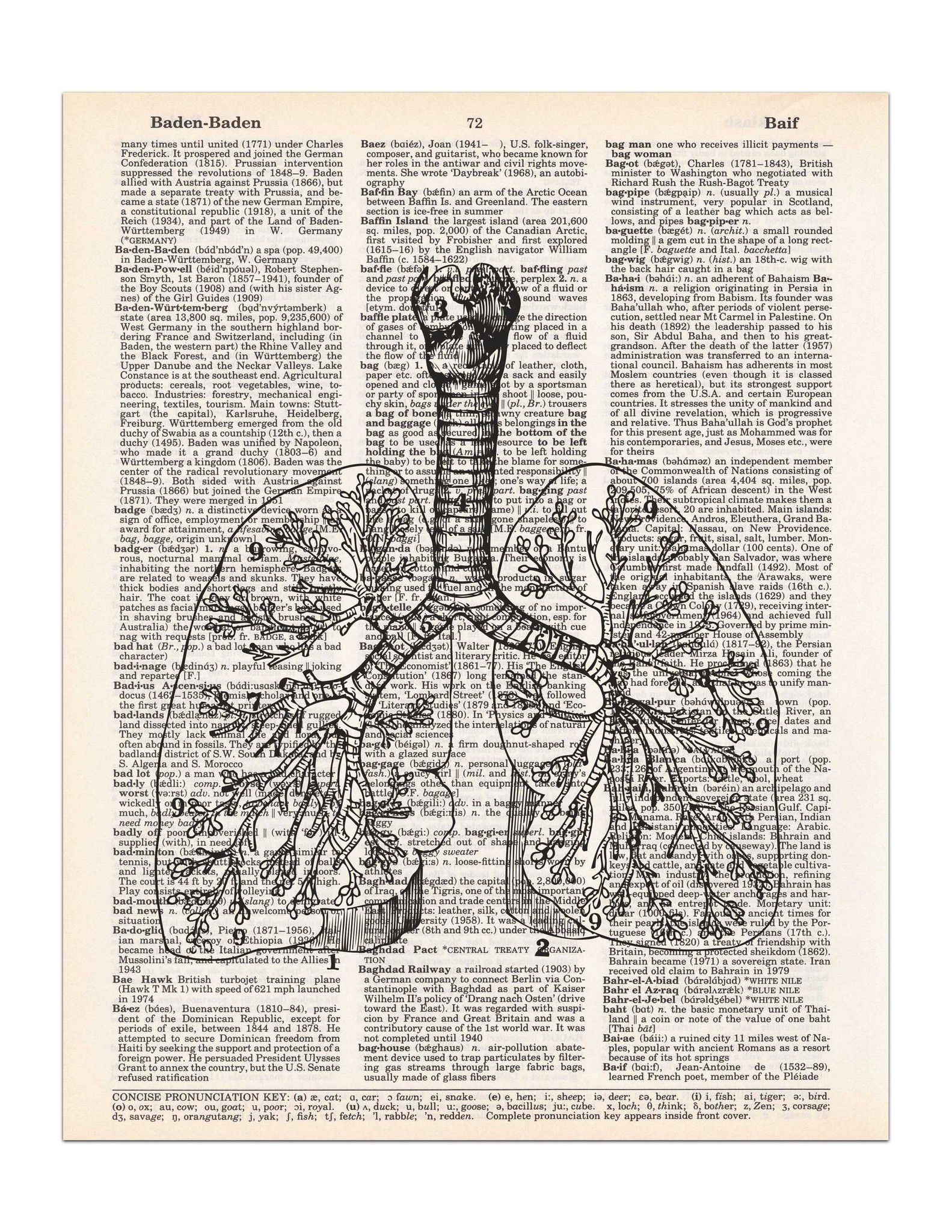 Lungs - Vintage Anatomy Drawing - Dictionary Print