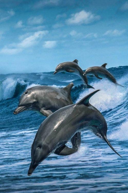 Delfine | Dieter Gödecke
