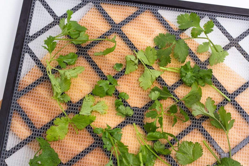 Cilantro can be laid on top of each other without worry of
