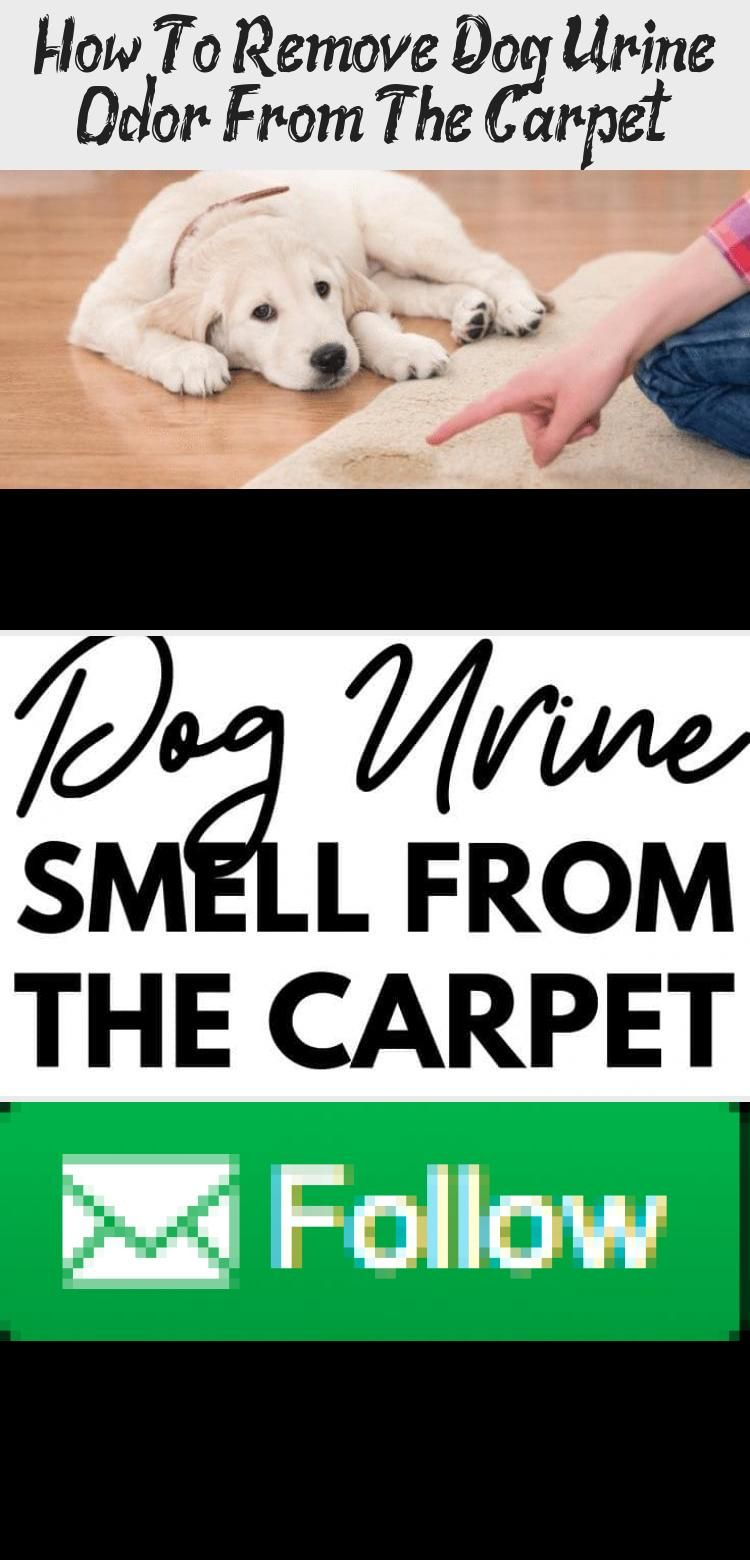 How To Remove Dog Urine Smell From The Carpet This Solution Works Like A Charm To Remove Pet Odors From The Carpet Carpetcleanin Dog Urine Removing Dog Urine Smell Pet