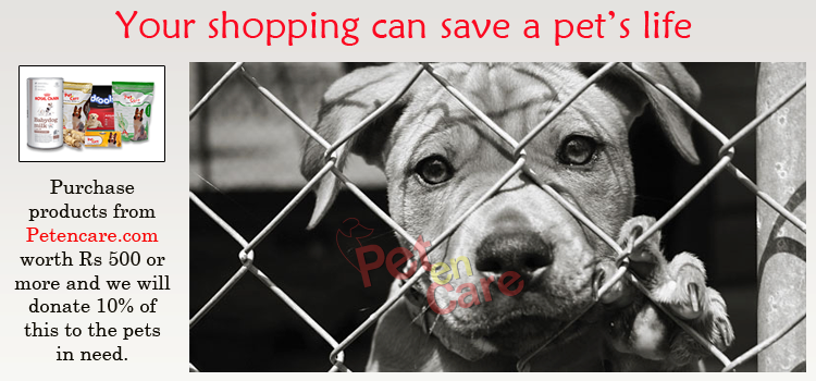 Your Shopping Can Save A Pet S Life Animal Shelter Shelter