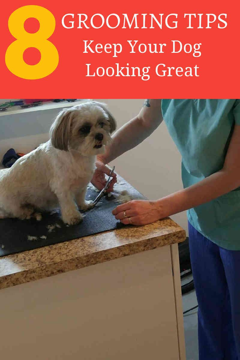 Dogs aren't getting cavities but do require dentistry. If