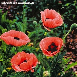 Oriental Poppy Seeds 9 Poppies Perennial Seeds Planting Poppy Seeds Flower Seeds Flowers Perennials