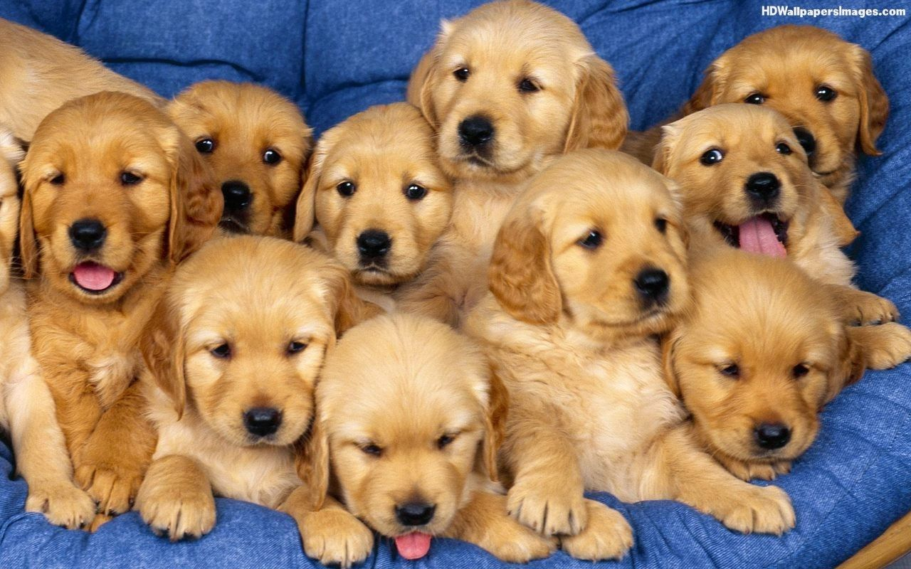 Cute Dog Group Of Cute Puppies Images Pictures Photos Hd