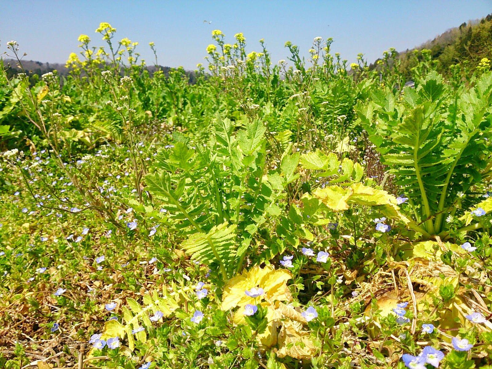 #farm #flowers #field