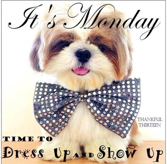 It's Monday, Time To Dress Up And Show Up | Cute dogs ...