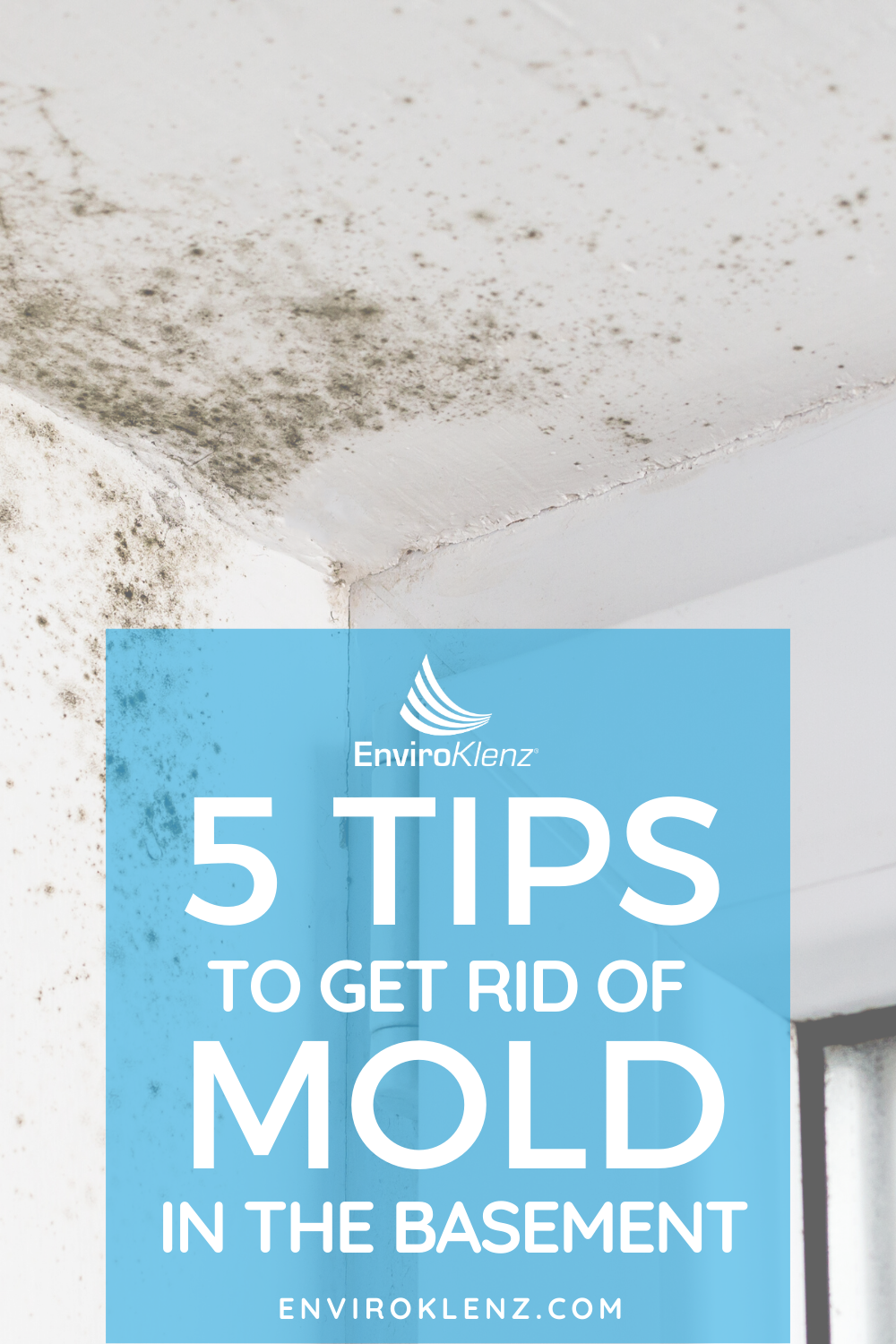 How to remove mold from your basement Enviroklenz in
