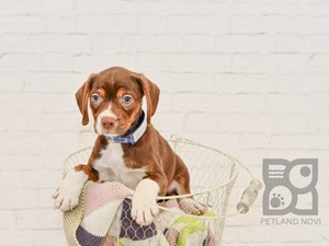 Check Out Our New Puppies Petlandnovi Puppylove Puppyoftheday