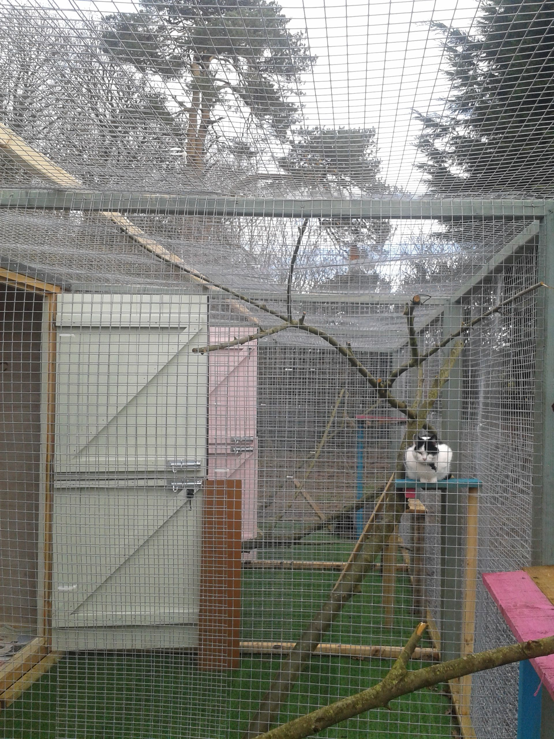 Ballyhogue boarders in Wexford, Ireland.  New cattery with outside space.