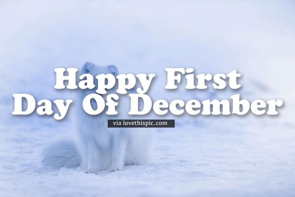 Arctic Fox Happy First Day Of December Quote Winter December