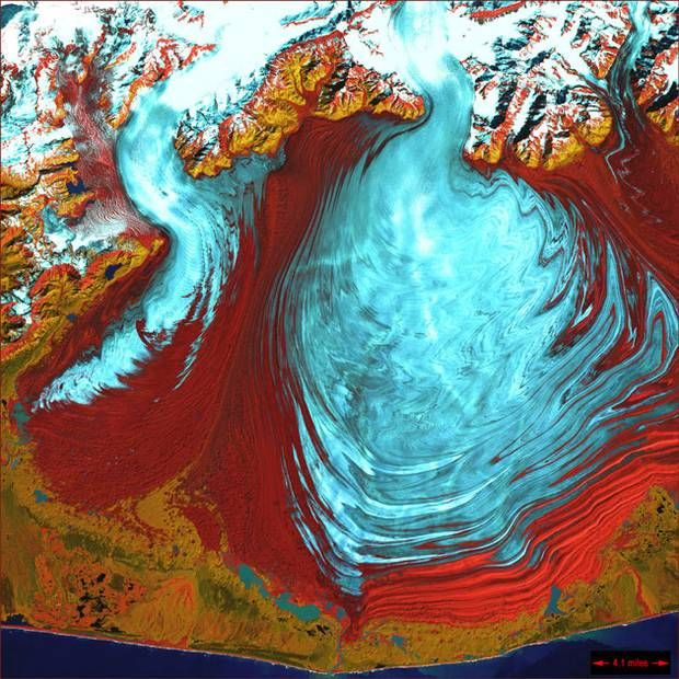 The tongue of the Malaspina Glacier, the largest glacier in Alaska, fills m - The Independent