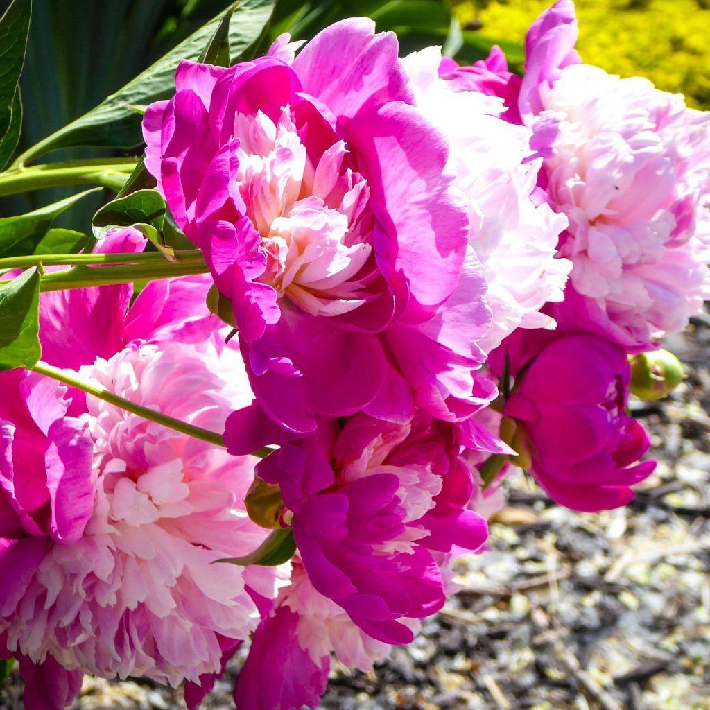 4750bc43f53cc6fa8effd2ae9931e745 - Denver Botanic Gardens Plains Conservation Center