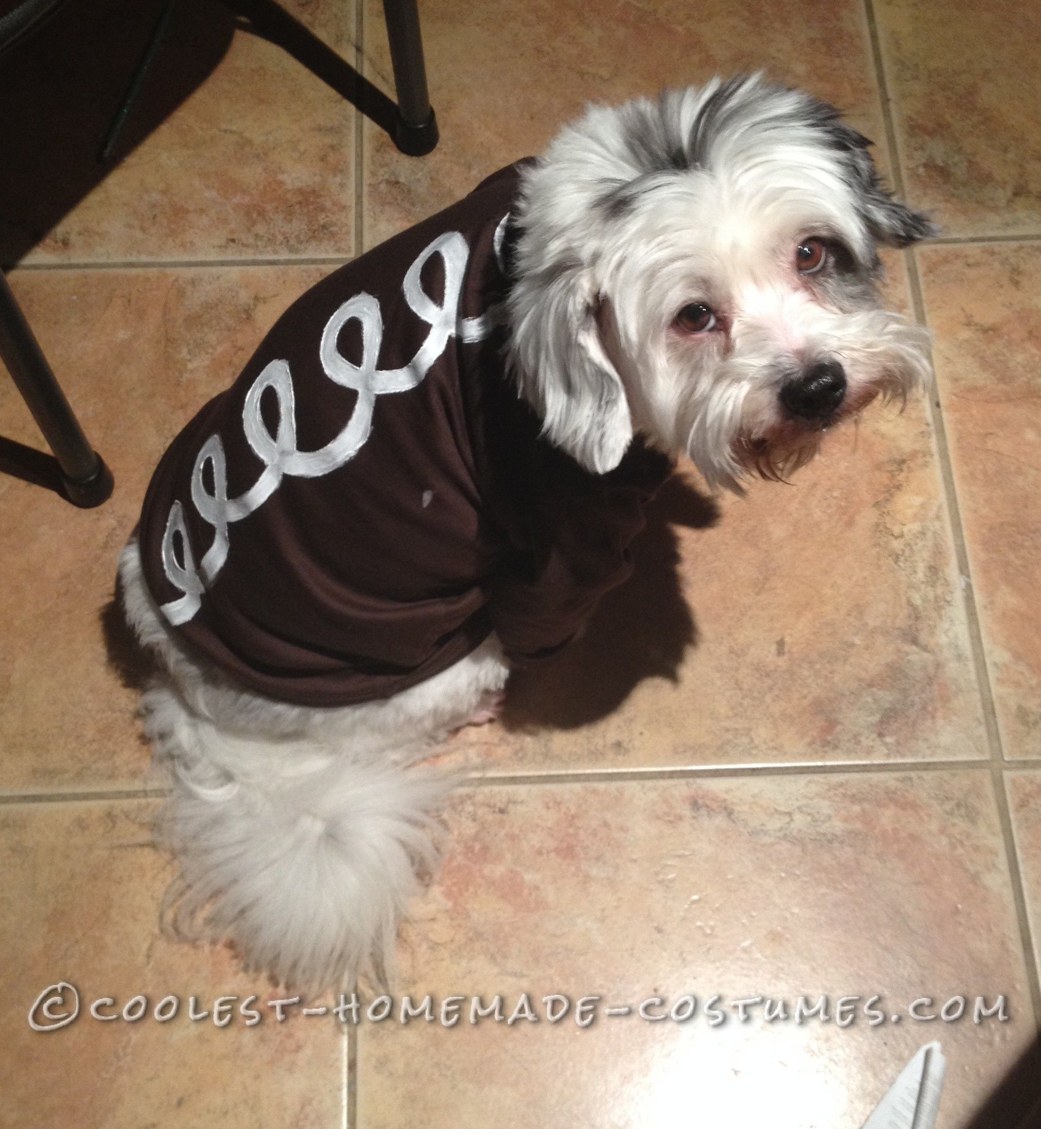Dog & Hostess Cupcake Dog Costume | Hostess cupcakes Homemade costumes ...