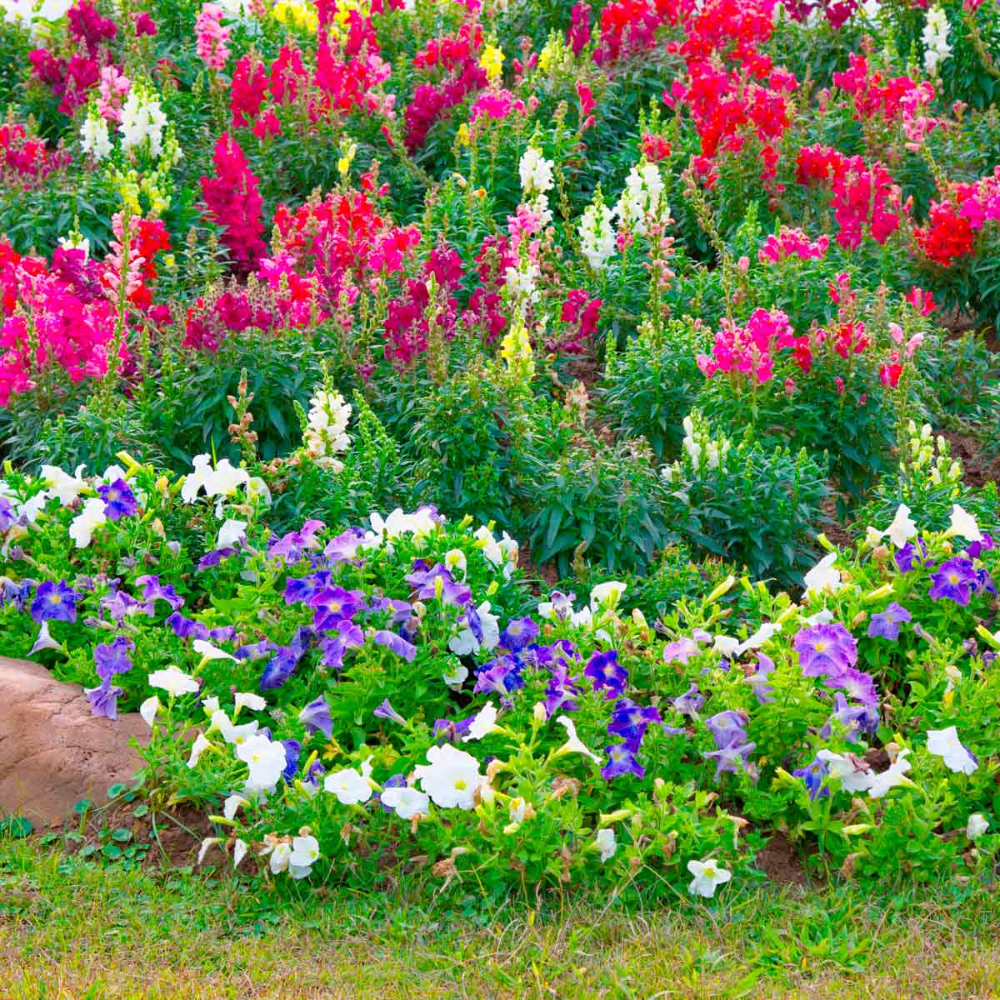 Photo of Our Favorite Flower Bed Ideas for Full Sun