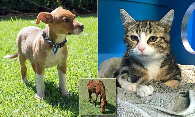 Adopt a pet for just 29! RSPCA slashes adoption fees for