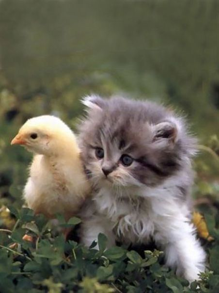 Too Cute Beautiful Cats Pictures Kitten Pictures Wild Cats