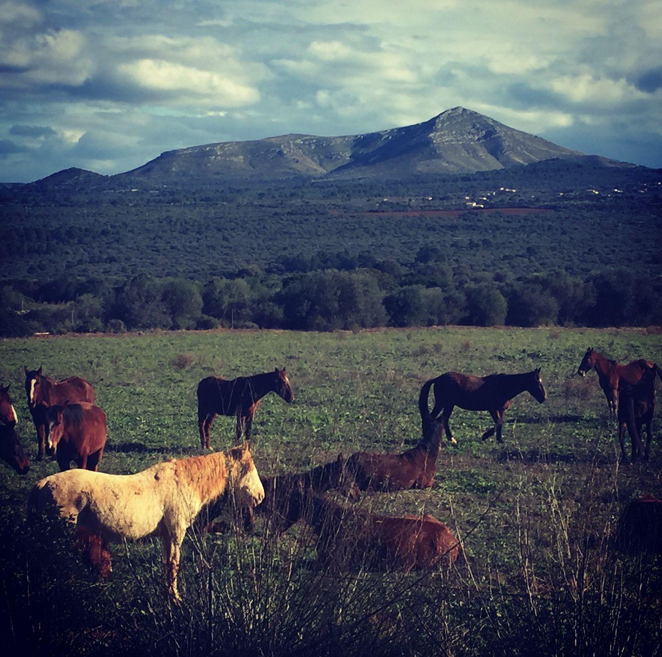 Horses in Mallorca