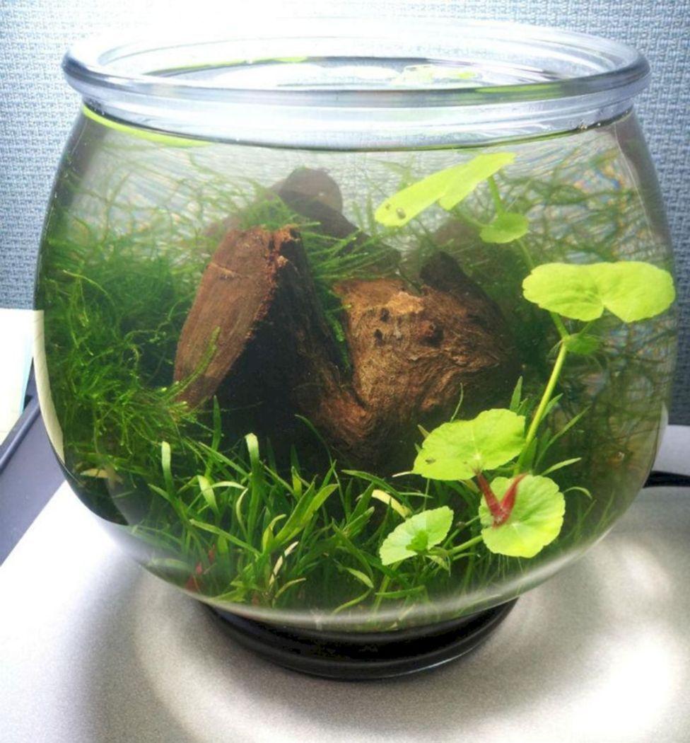 Aquarium Backyard Garden Ideas 10   Aquatic plants