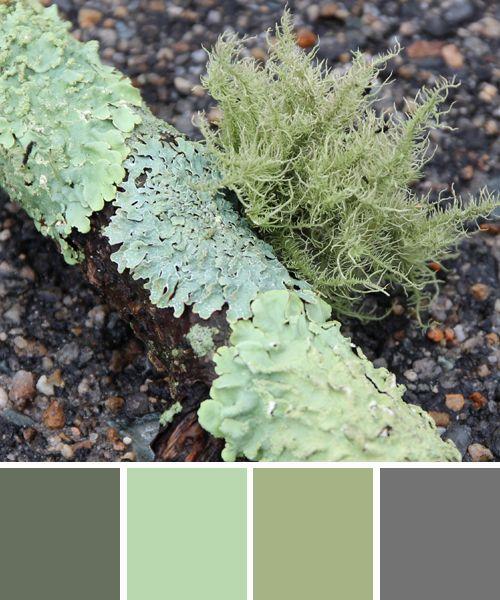 pin von alechia neathery auf colour palette gr n und. Black Bedroom Furniture Sets. Home Design Ideas
