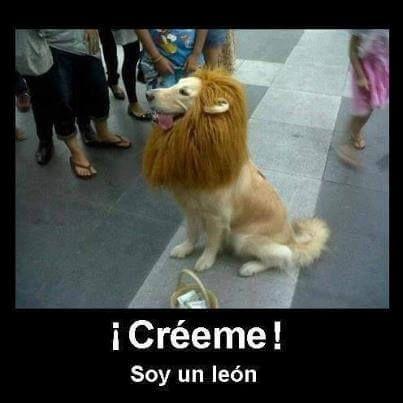 Leon Animal Memes Dog Memes Dogs