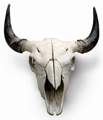 Decor Buffalo Skull Animal Skulls Wolf Skull
