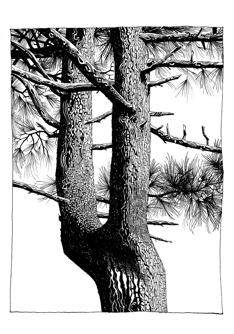 Pines | Jamie Hewlett
