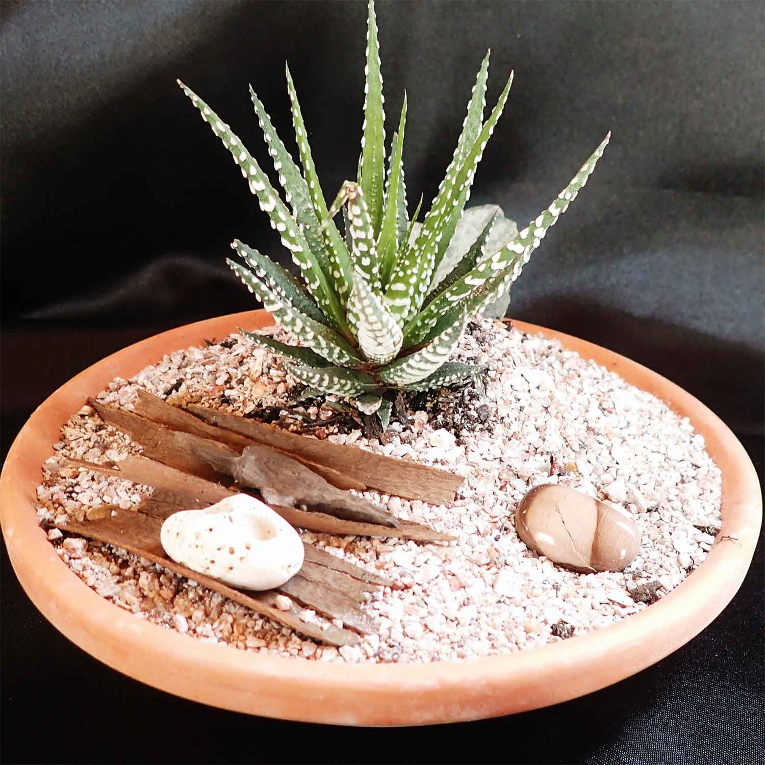 shallow dish with succulent plant, bark, grit and pebbles